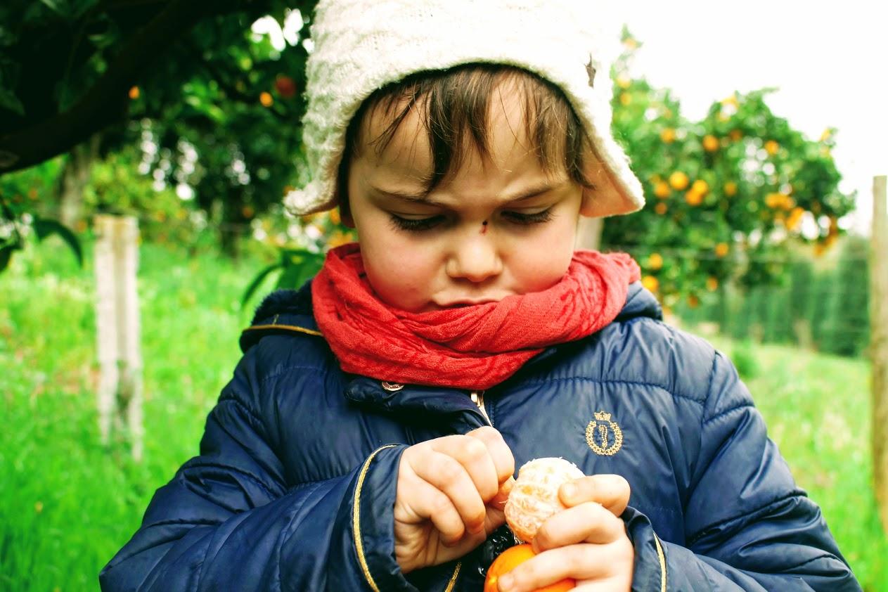Orange Harvest Experience